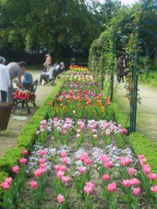 Des tulipes dans le jardin botanique de Metz