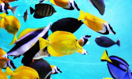 Grand aquarium de Saint-Malo : plongez au cœur des océans !