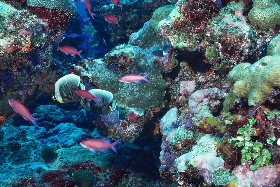 Triton pour les amateurs de plongée sous-marine