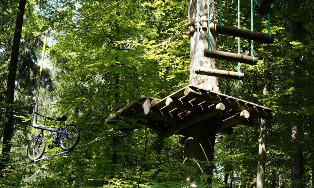 Grimpe d'arbre : trois raisons qui vous donneront envie de faire cette activité