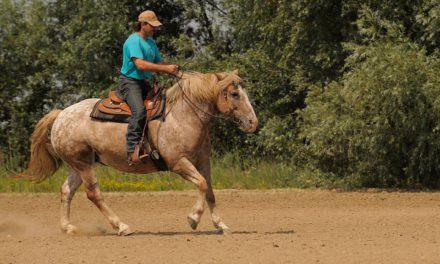 Pourquoi faire de l'équitation ?