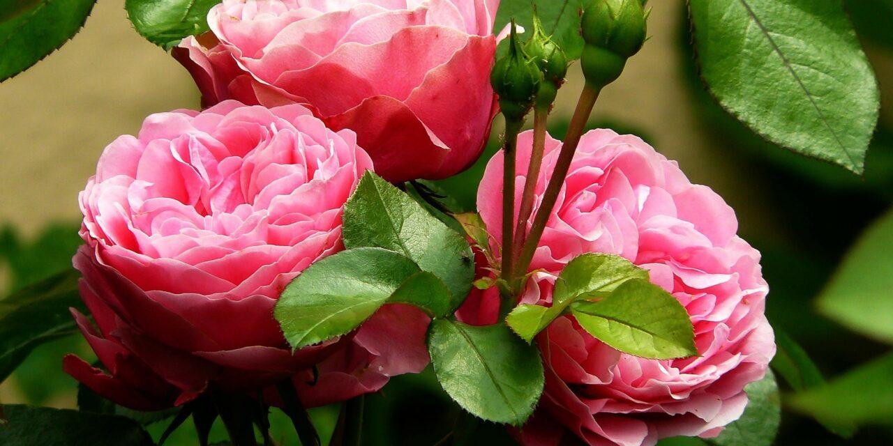 Des idées de jardins originaux proposées par les paysagistes